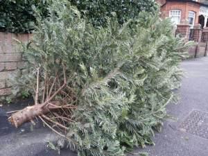 8 de Enero del 2015 - Londres Londres es explosivo. Aquí compran los arboles cortados para hacer el árbol de navidad, cuando termina la navidad lo ponen en la calle para que lo recoja el camión de la basura. ¿Al año siguiente compramos otro árbol? ¿ Por qué no plantarlo en el jardín? ¿Por qué abandonarlo cada año hasta navidad? ¿Cuántos arboles son asesinados en navidad?                          Anónimo